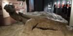 Rzeźba żółwia w muzeum na Majdanku. Kliknięcie w miniaturkę obrazka spowoduje wyświetlenie powiększonego zdjęcia.